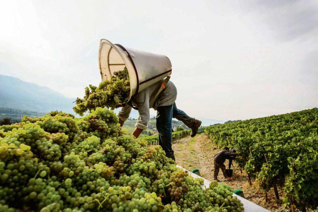 Около 100 000 человек, работающих в богатых особняках, на виноградниках или кухнях ресторанов, живут в условиях жёсткой эксплуатации. Органы правосудия не вполне представляют масштаб проблемы.