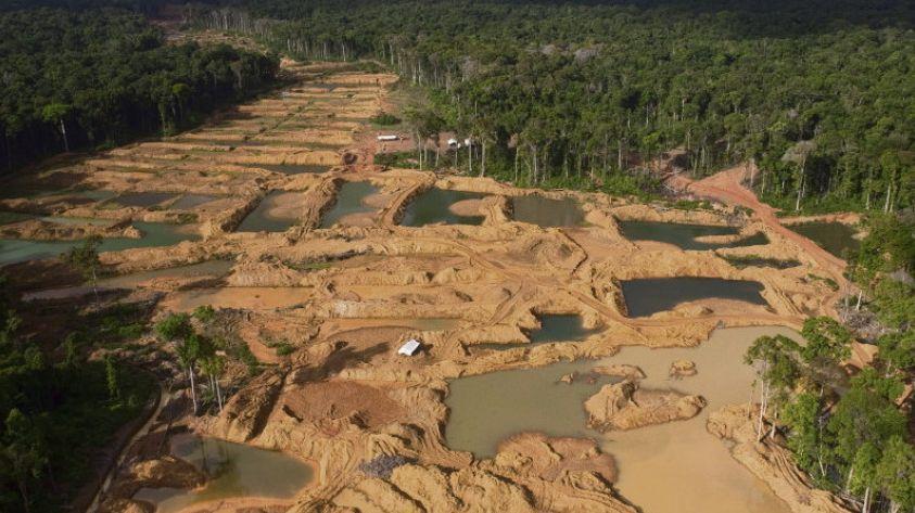 Неудачи Франции в борьбе за сохранение лесов