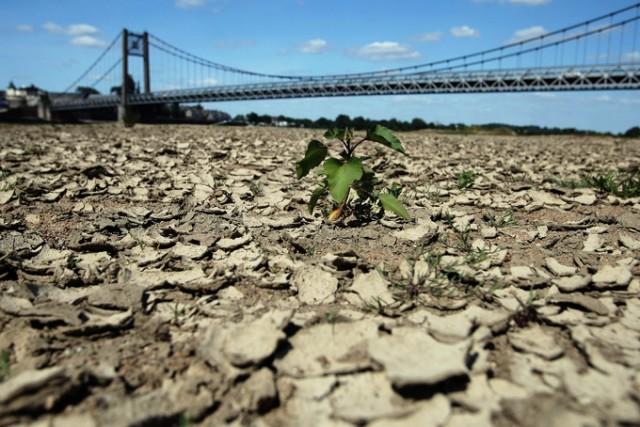 Лето 2020 выдалось засушливым. В 53 департаментах Франции уже введены ограничения по расходу воды. Сельхозпроизводители боятся повторения ситуации 2019 года.
